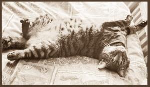 Cat Yoga Final