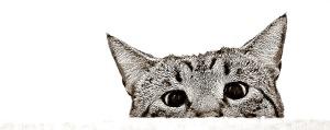 Psycho Kitty Blog Version